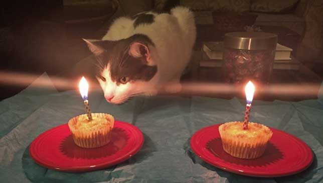Cat Birthday Cake Recipe