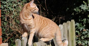 Orange Tabby Cat: Fascinating Facts About Orange Cats