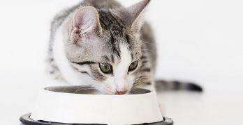 Organic Kitten Food