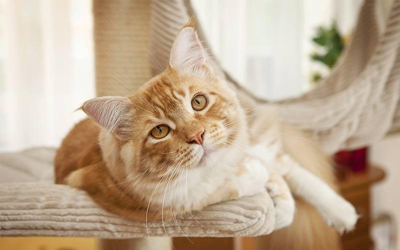 best cat perches