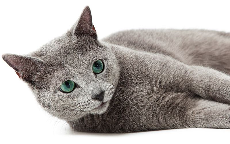 300 Russian Blue Cat Names