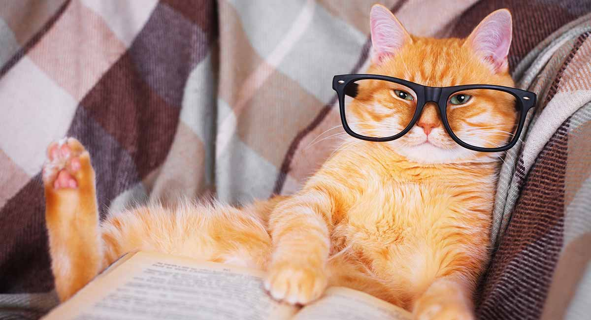 Funny Cat Names 150 Hilarious Ideas For Naming Your Kitty