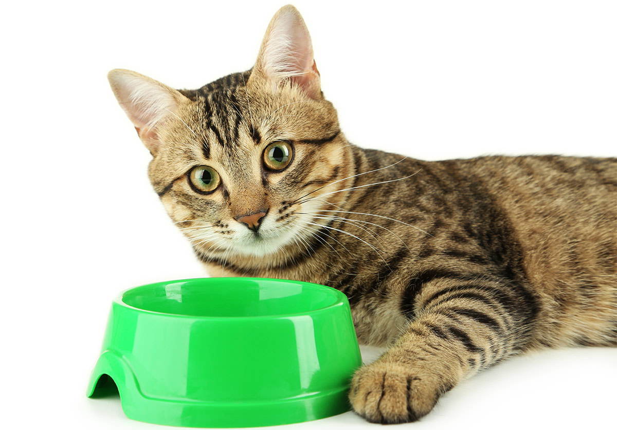 best cat food brands the happy cat site