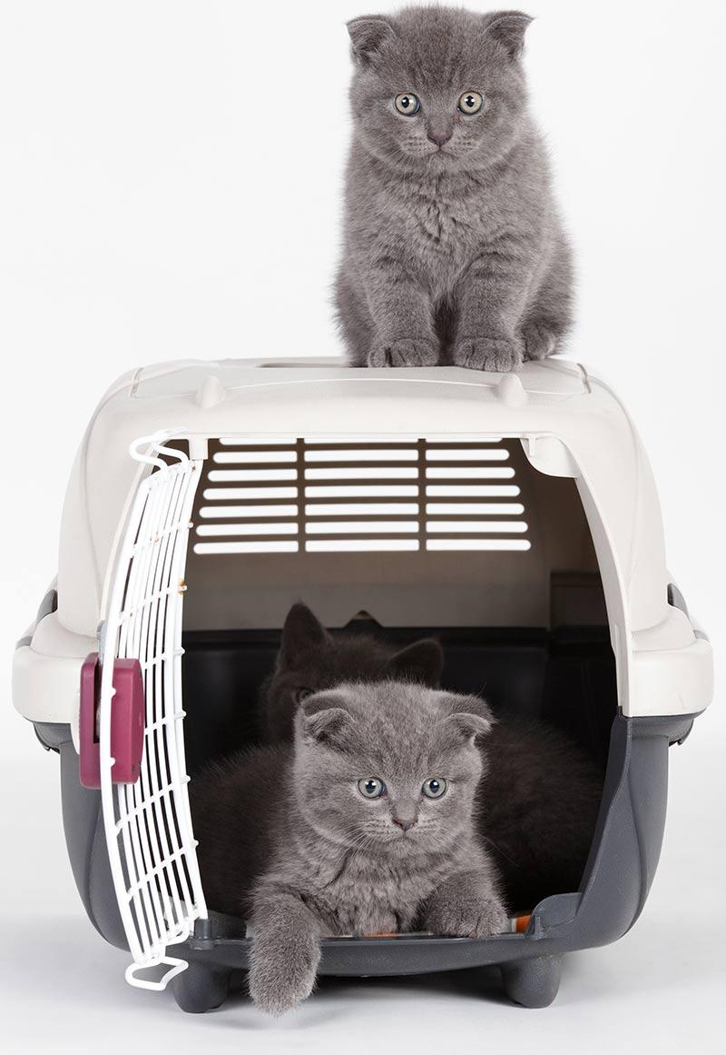 best kitten carrier