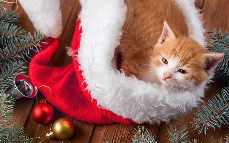Cat Christmas.Christmas Gifts For Cats Great Ideas For Every Budget