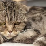 Feline Herpes – Information For Cat Owners