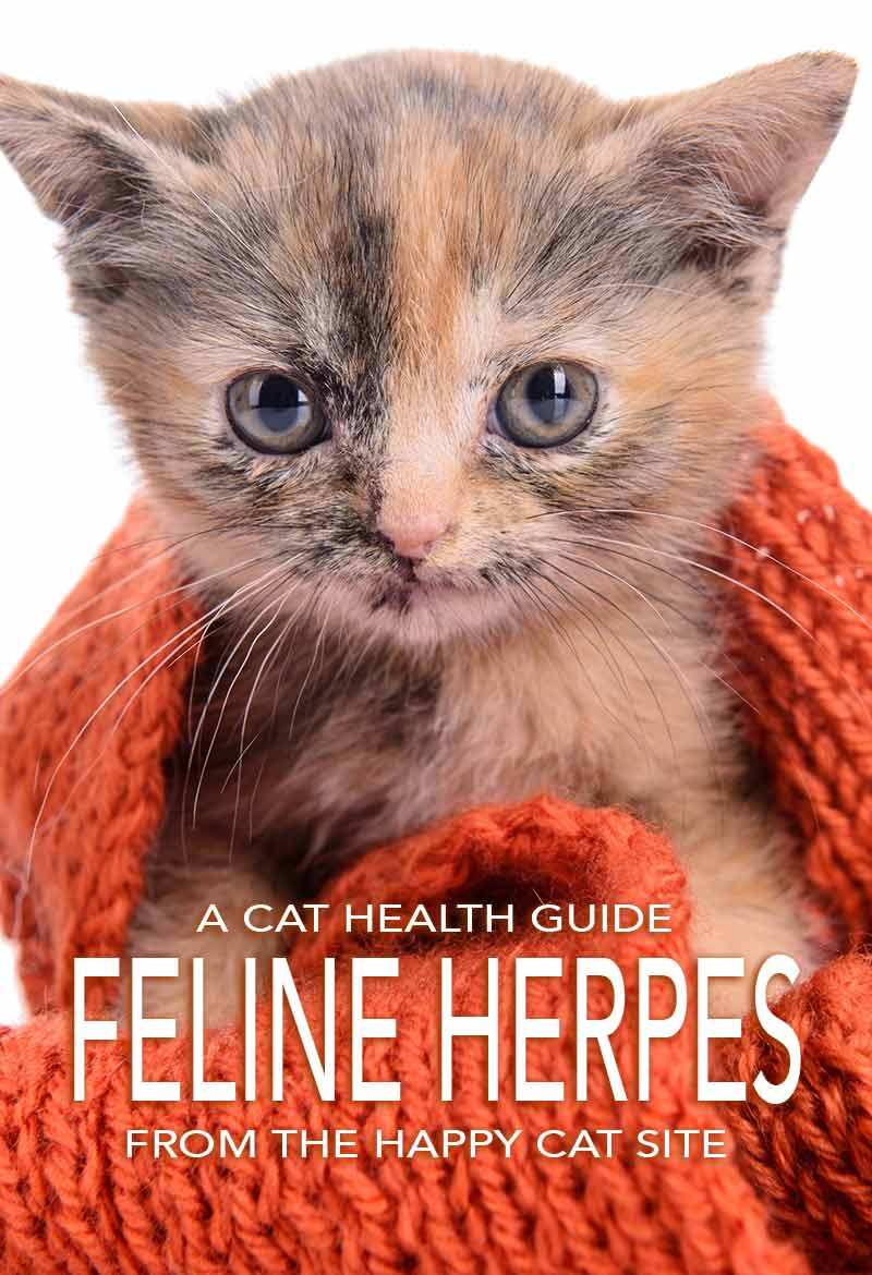 Feline Herpes - Information For Cat Owners