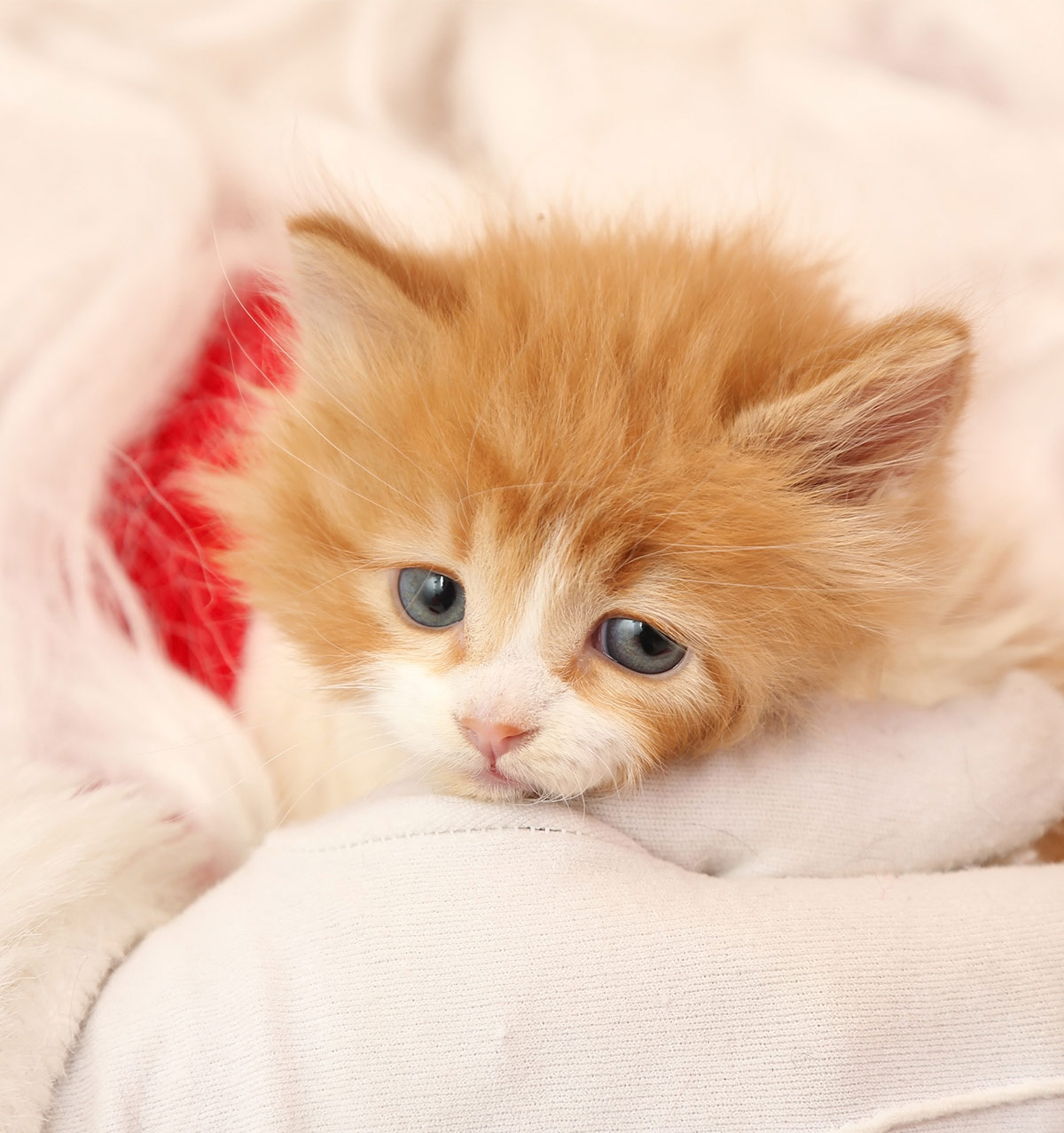 Kitten Names Adorable Awesome And Unusual Ideas For Naming Your Cat