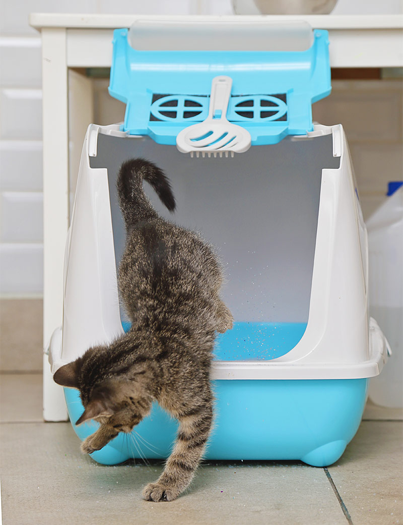 It should also be located in a quiet place where kitty can finish her  important business without being disturbed or interrupted. best litter box