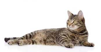 Tabby Cat Names – Inspiration And Ideas For Naming Your Tabby Kitty