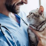 Buprenorphine given to a cat by a vet