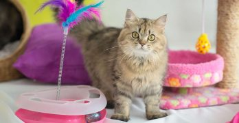 Choosing the best cat toy