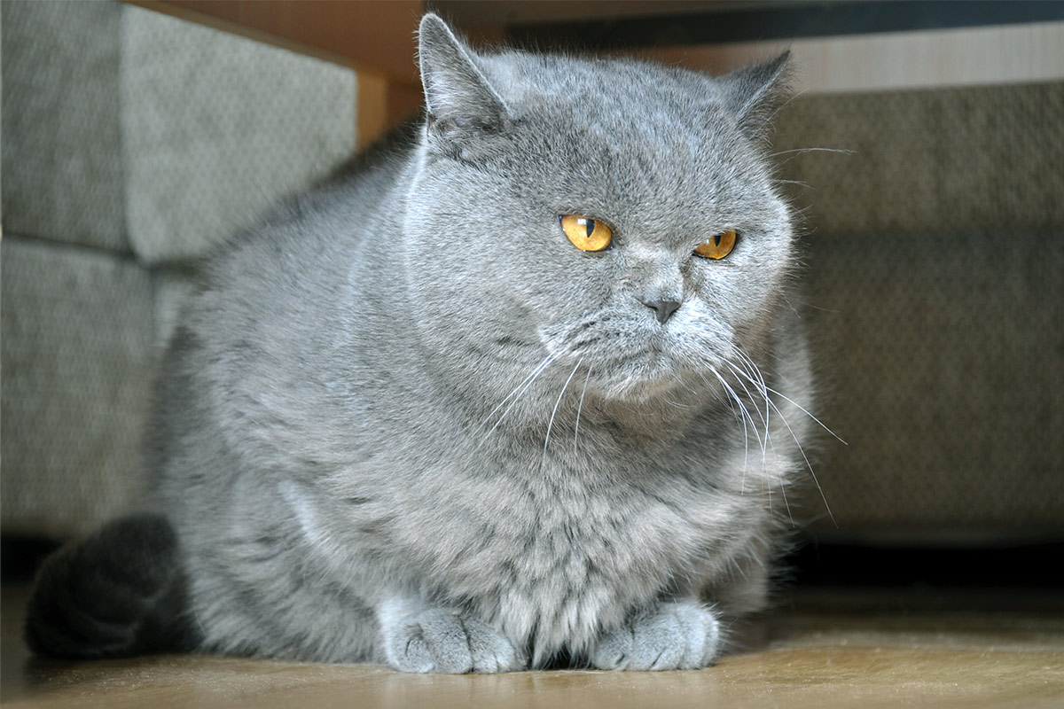 cats gaining weight