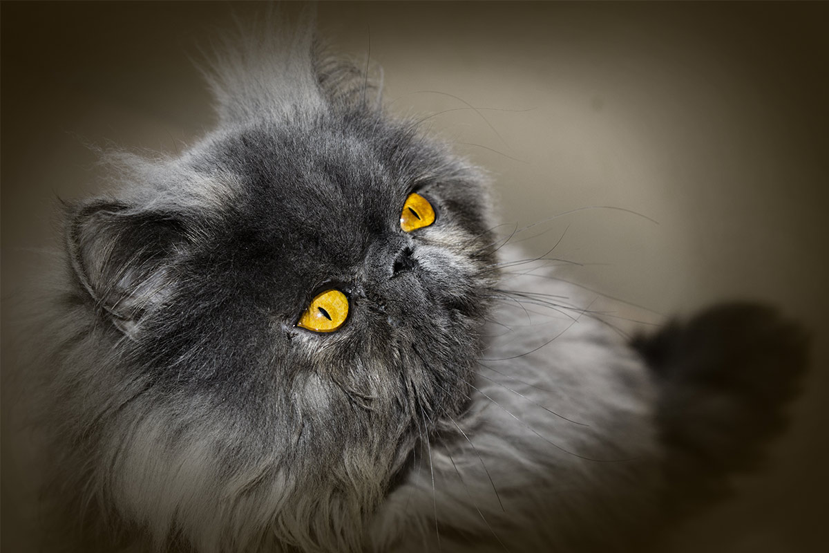 skin diseases cat