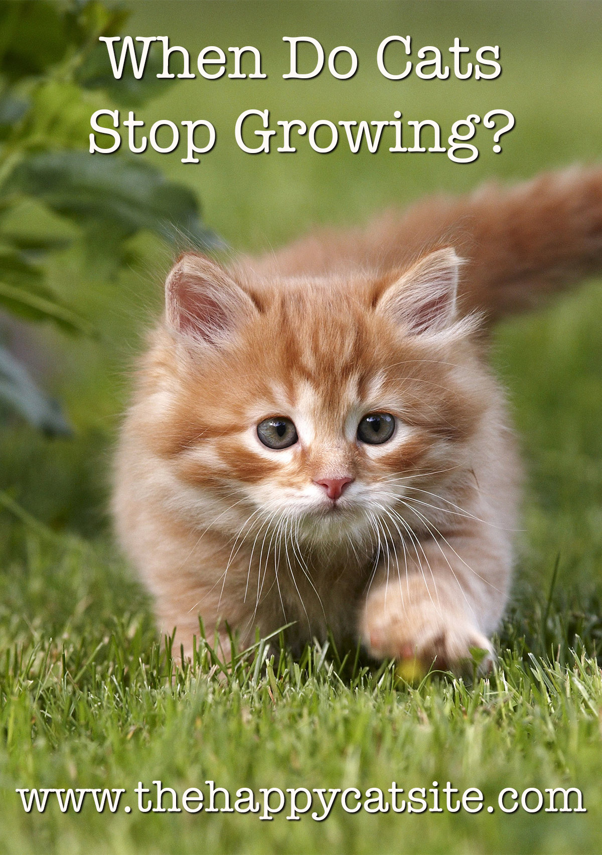 When Do Cats Stop Growing A Complete Kitten Growth Guide