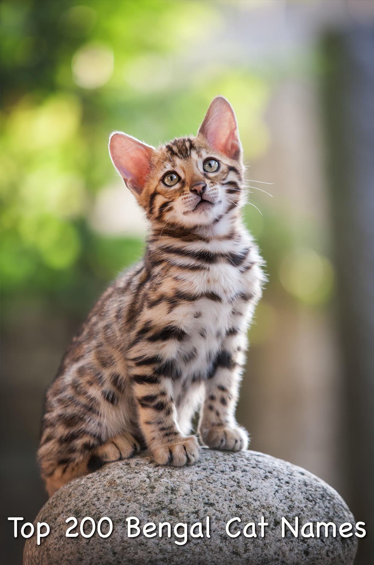 Bengal Cat Names - 200 Ideas For Naming Your Male or Female