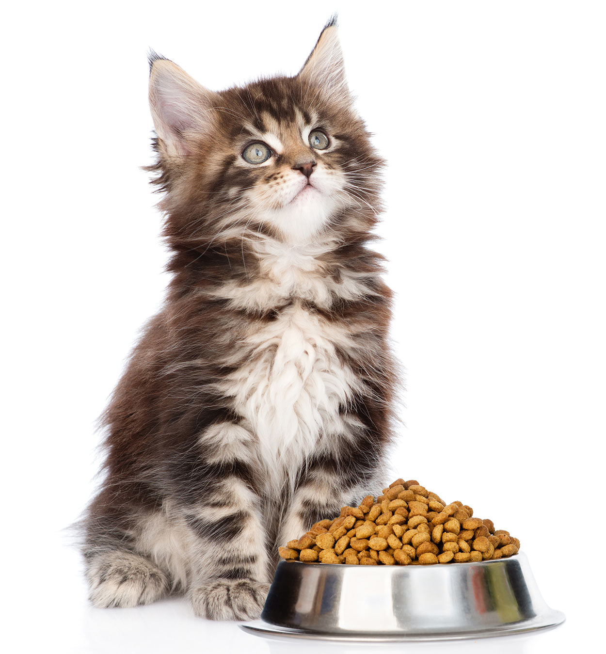 best cat food for maine coon kittens