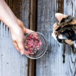 Best Food For Outdoor Cats – Find The Right Fuel For Your Cat