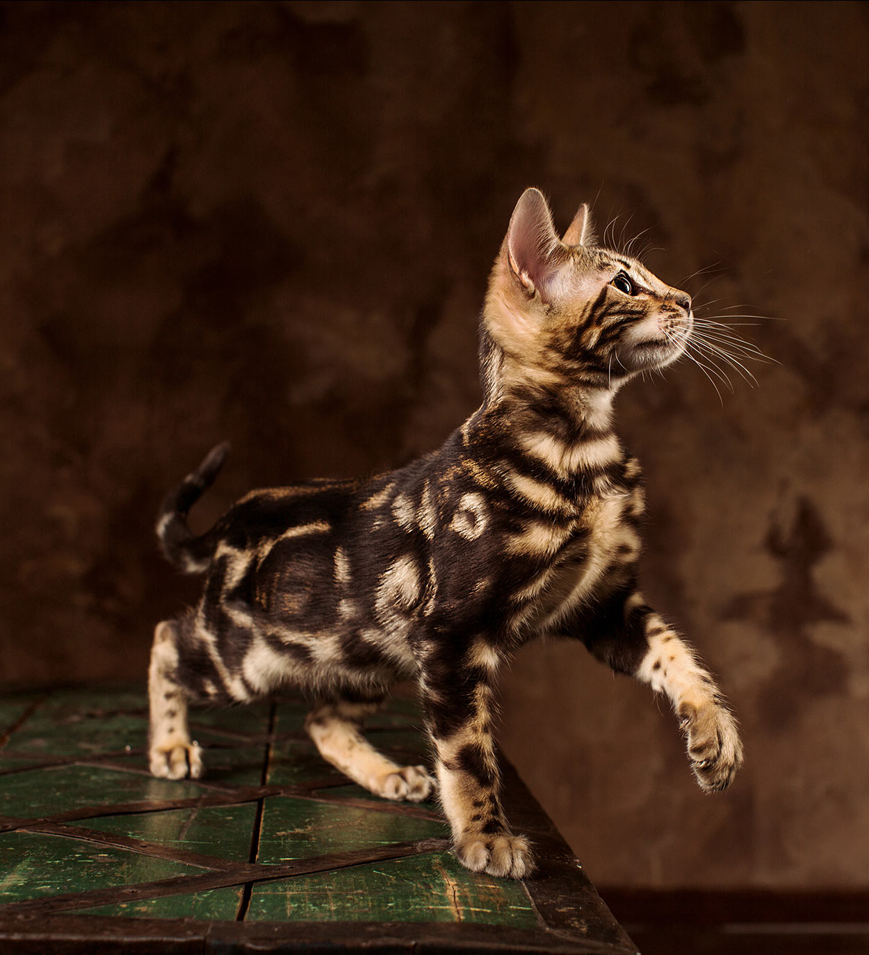cute bengal cat names