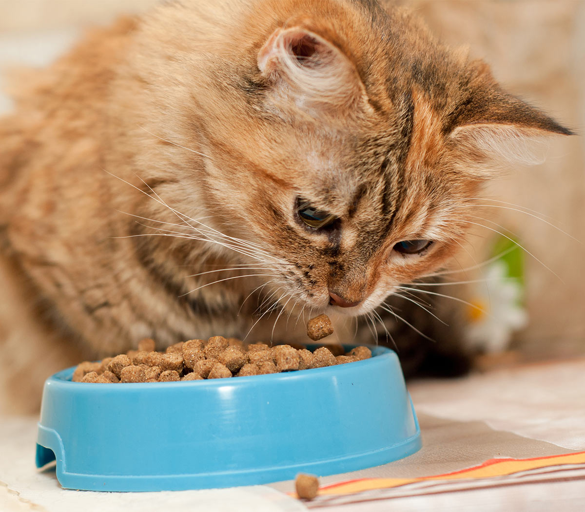 Grain Free Dry Cat Food For Diabetic Cats