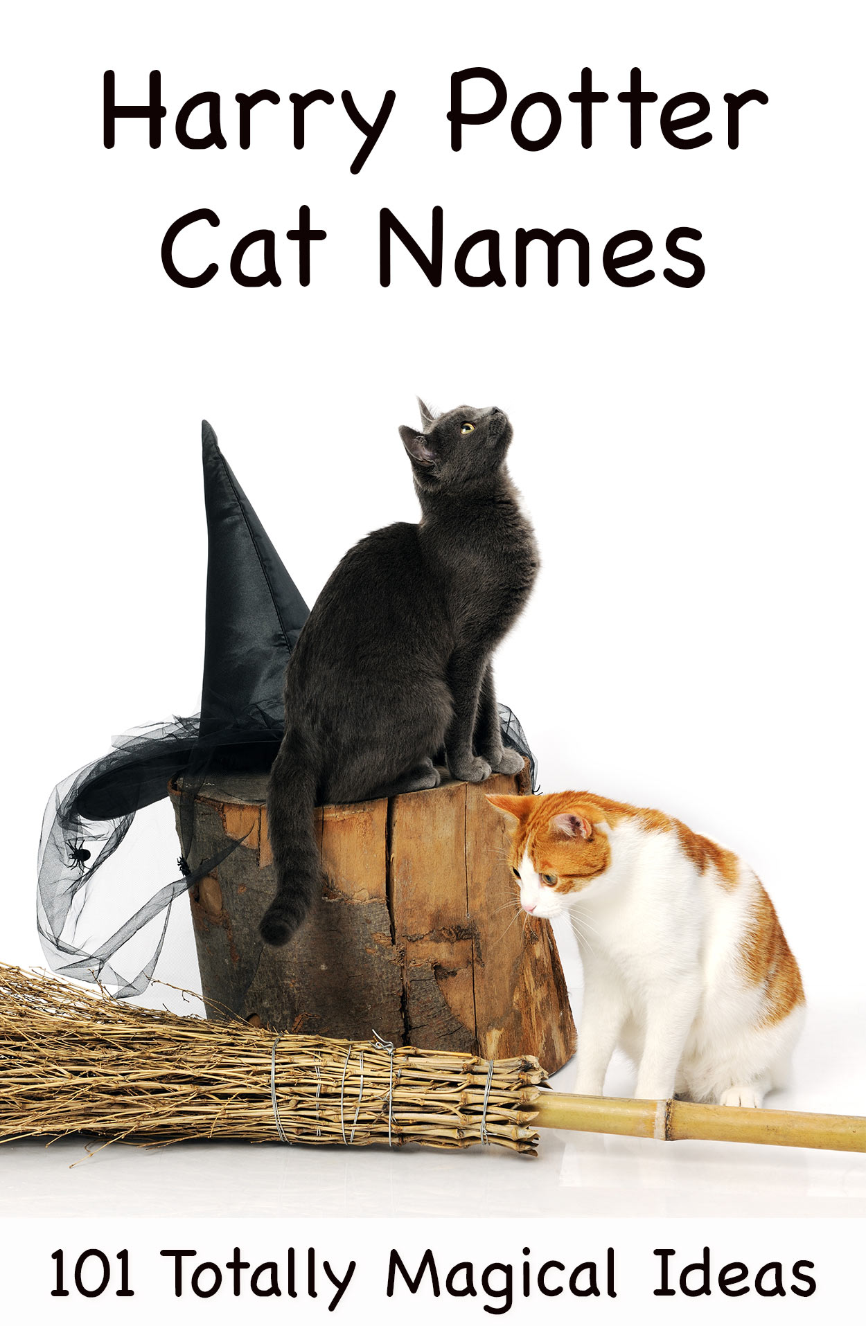 harry potter cat names