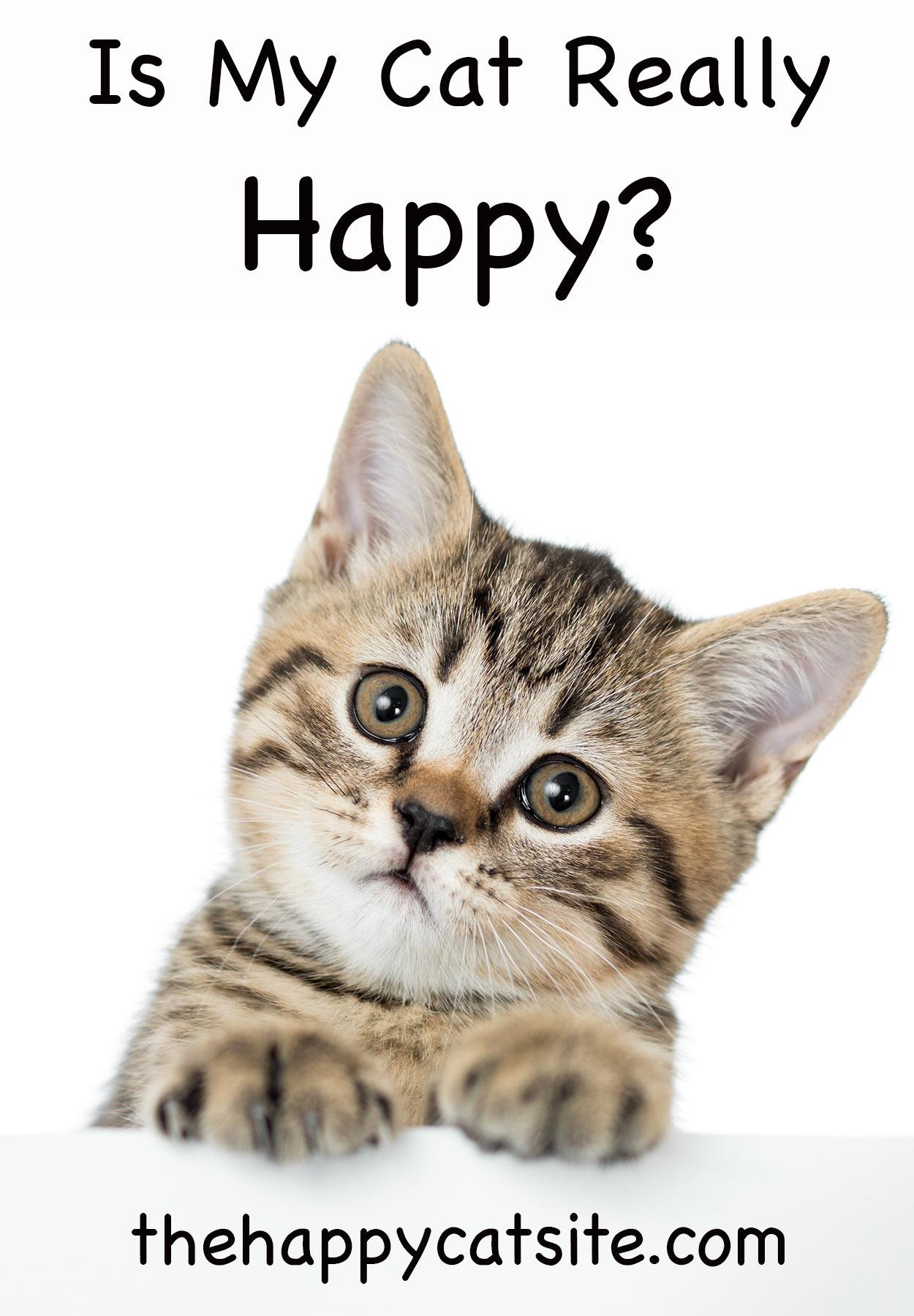 is my cat happy