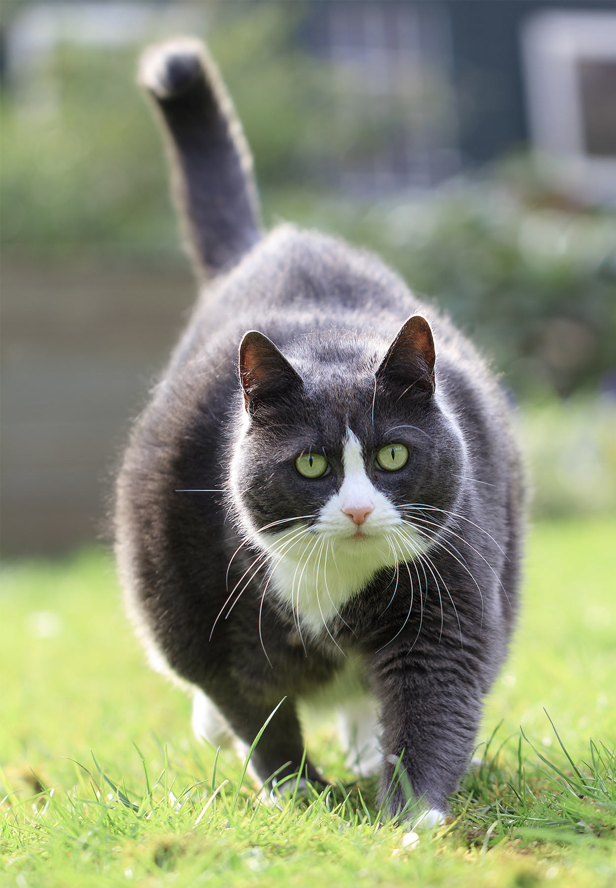 cat boarding chicago