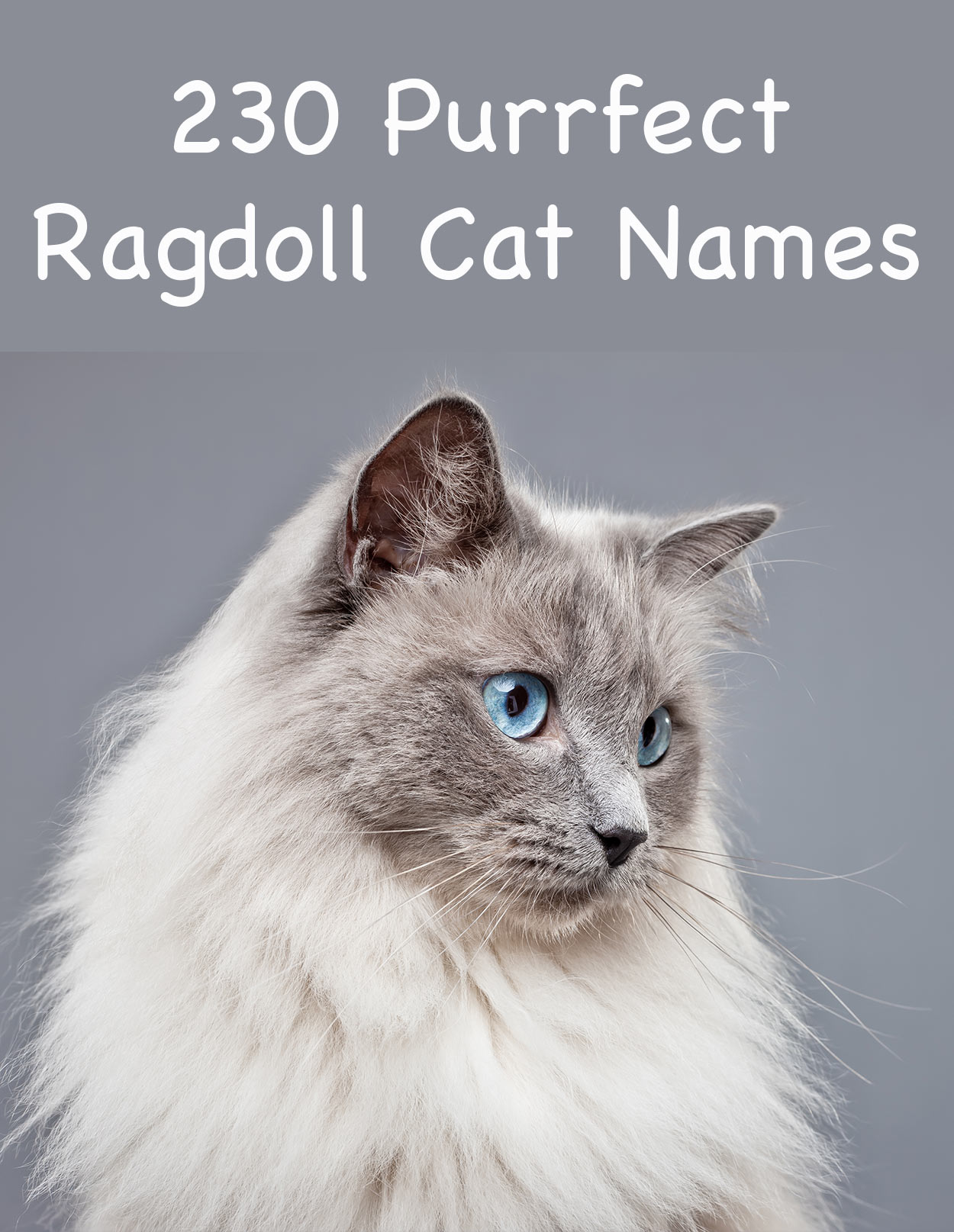 Common Male Cat Names