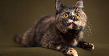 Tortoiseshell Cat Names