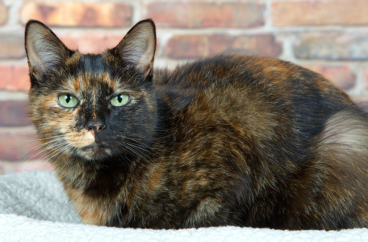 black tortoiseshell cat names