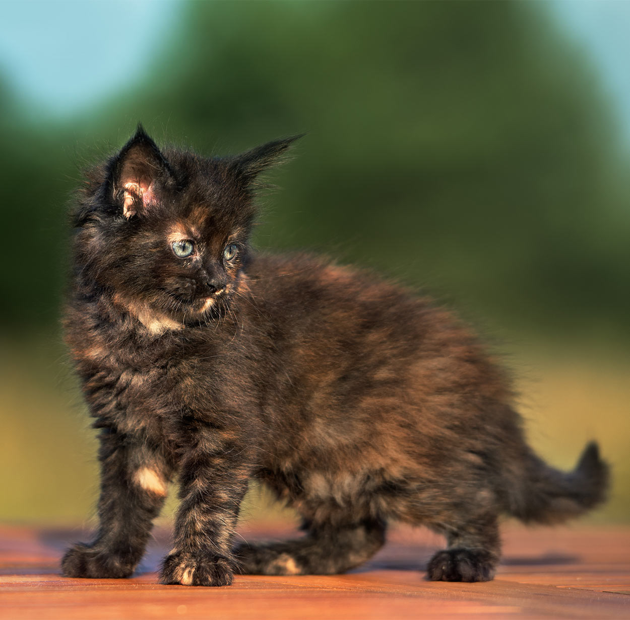 Cat Names For Female Calico Cats