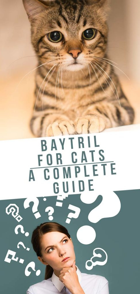 baytril for cats