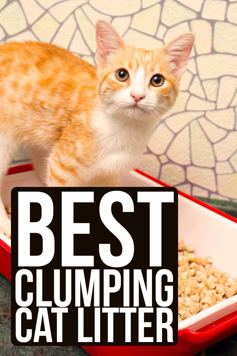 Best clumping cat litter - Cat product reviews.