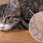 cat dry skin