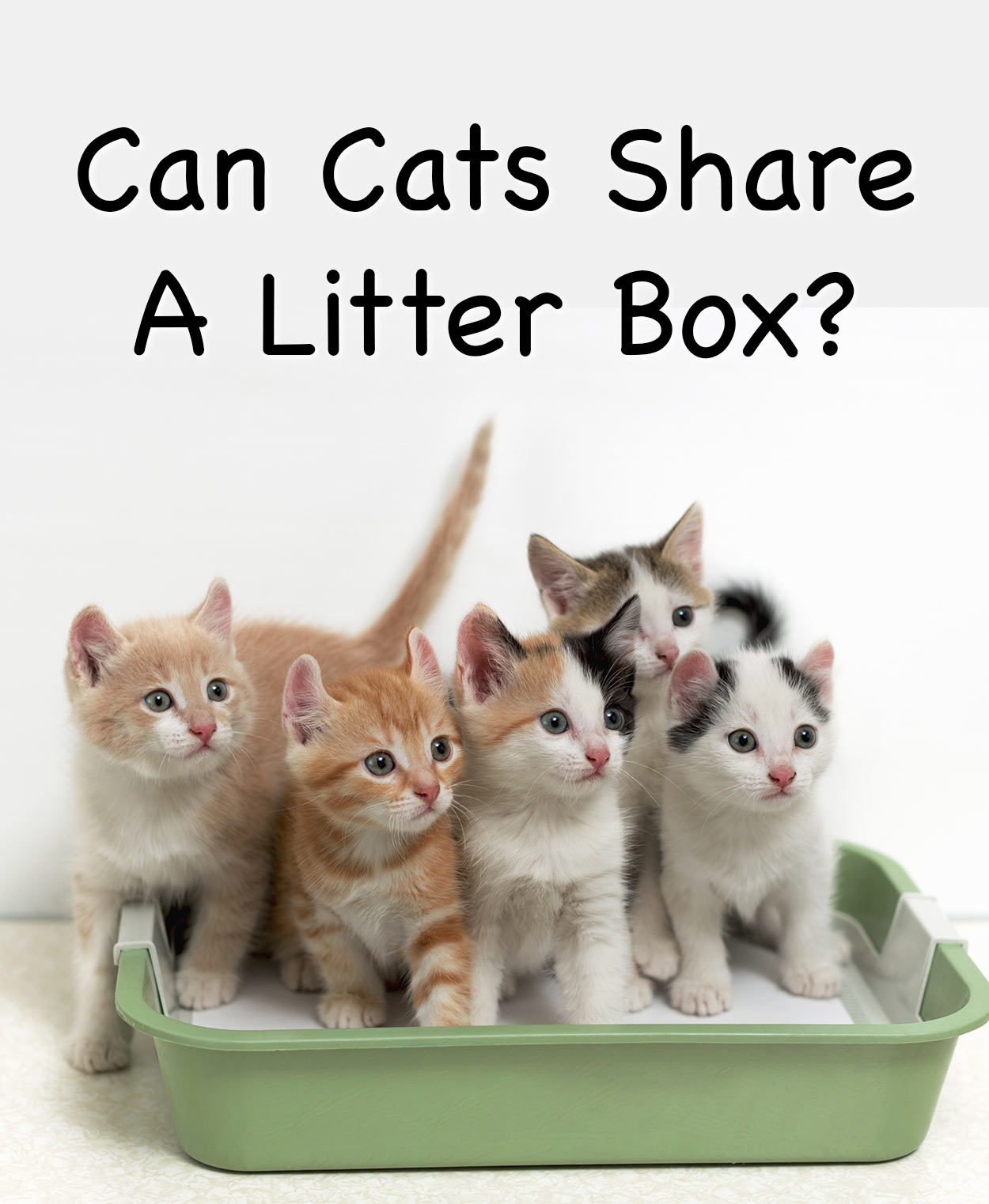 can cats share a litter box