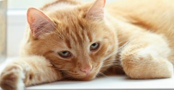 Cat Dry Skin – Causes and Cures