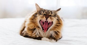 cat teeth problems