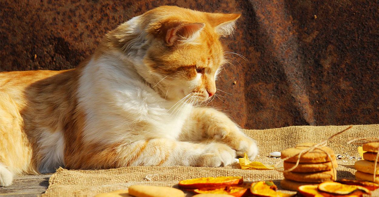 cat treat recipes