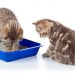 Can Cats Share a Litter Box?