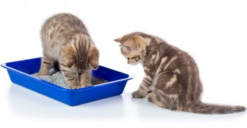 can cats share a litter box