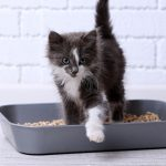 Best Clumping Cat Litter