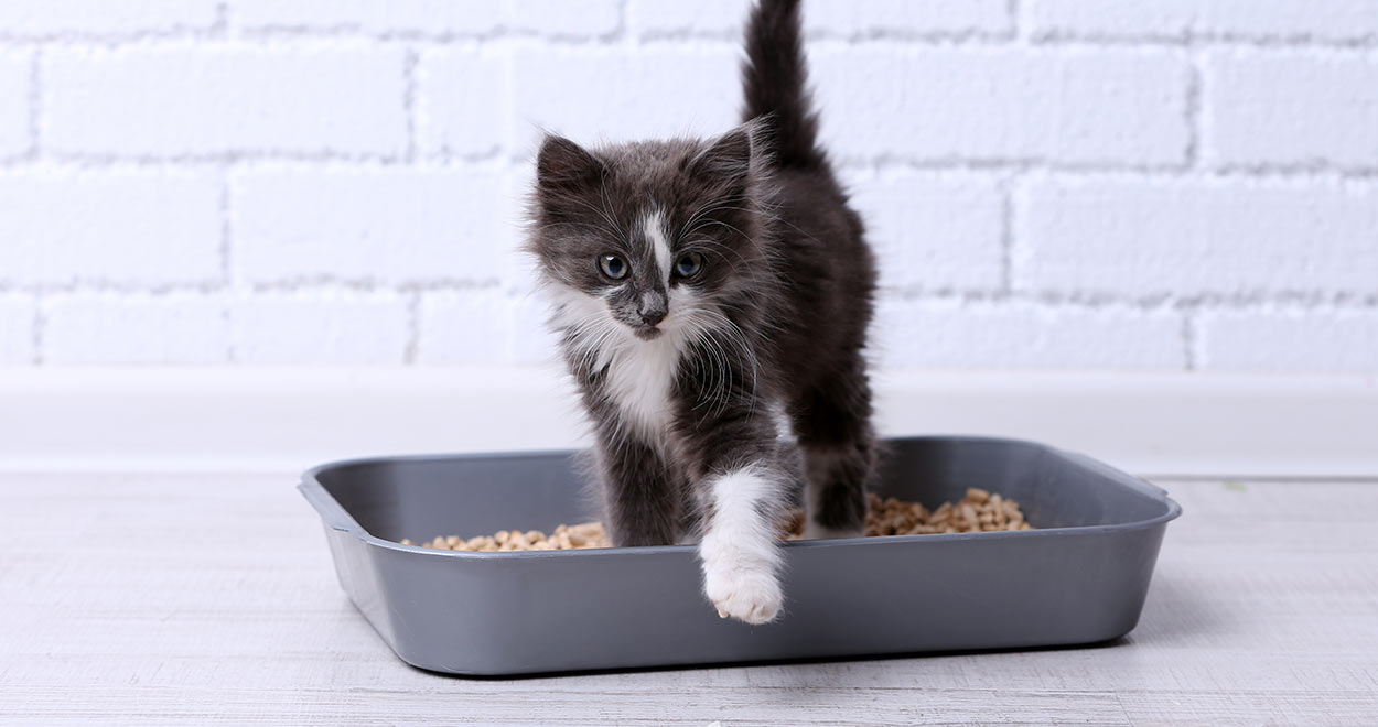 Flushable Cat Litter
