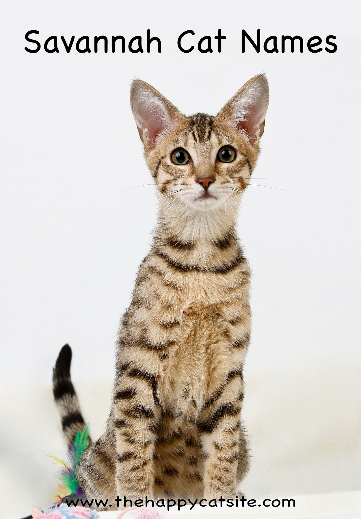 savannah cat names