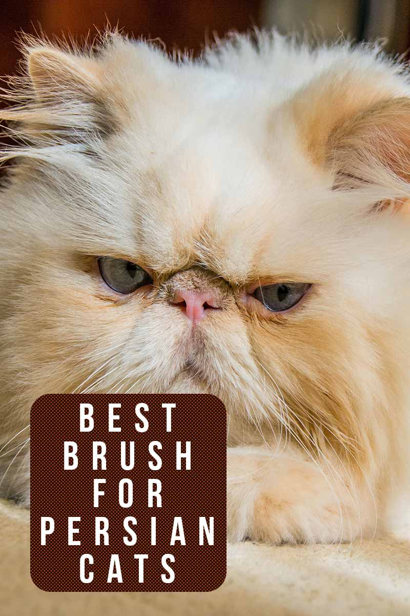 Best brush for Persian cats - Grooming products reviewed by TheHappyCateSite.com