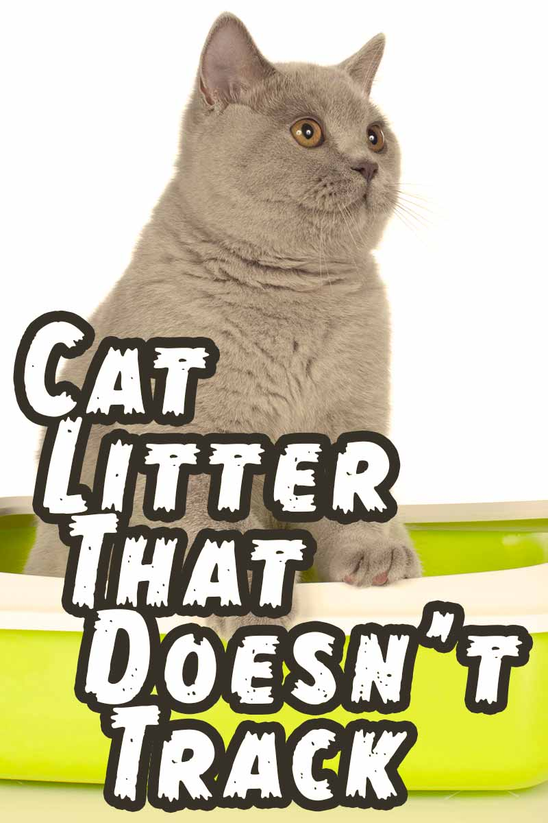 Cat Litter That Doesn't Track - Cat supplies and product reviews.