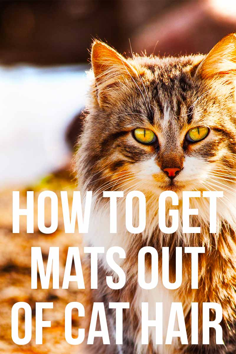 How To Get Mats Out Of Cat Hair - Grooming advice & help from The Happy Cat Site.
