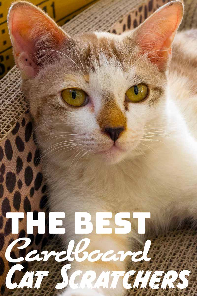 The Best Cardboard Cat Scratchers - Cat toys & furniture reviews from The Happy Cate Site.