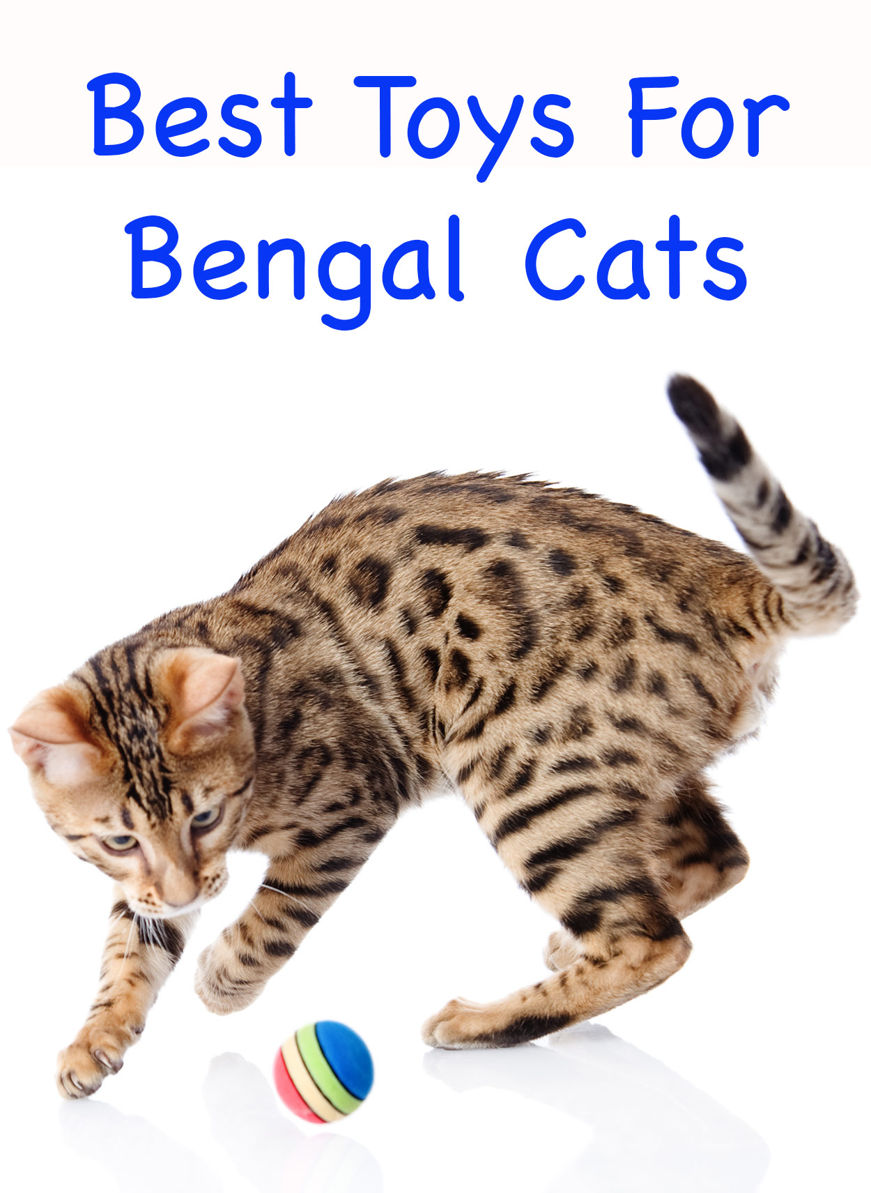 bengal cat toys - our favorite and most interactive choices