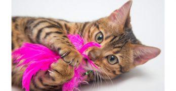 bengal cat toys