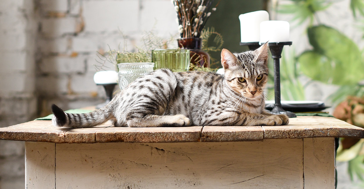 best food for savannah cats